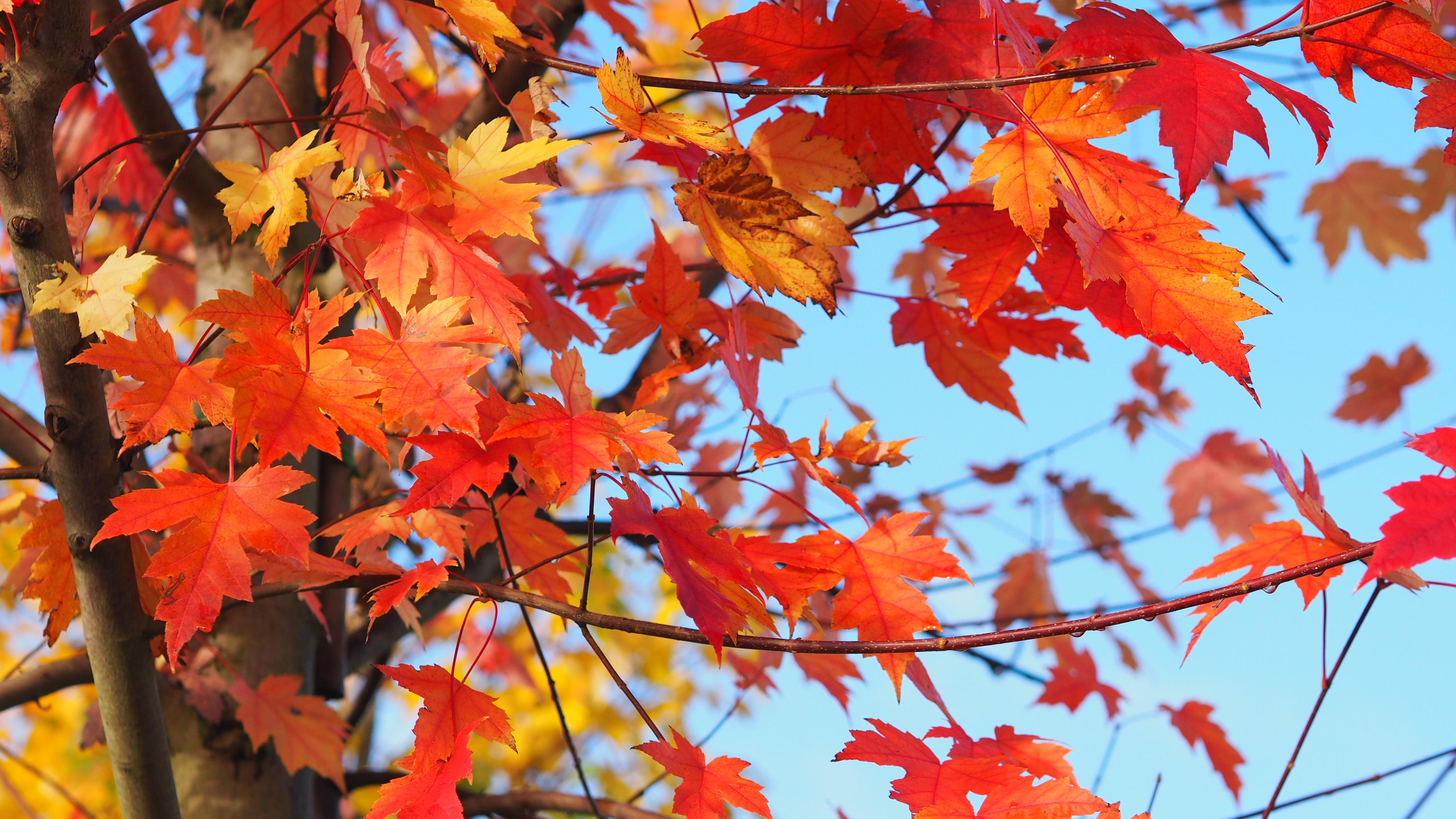 Le rouge : couleur parfaite pour cet automne. N'hésitez pas